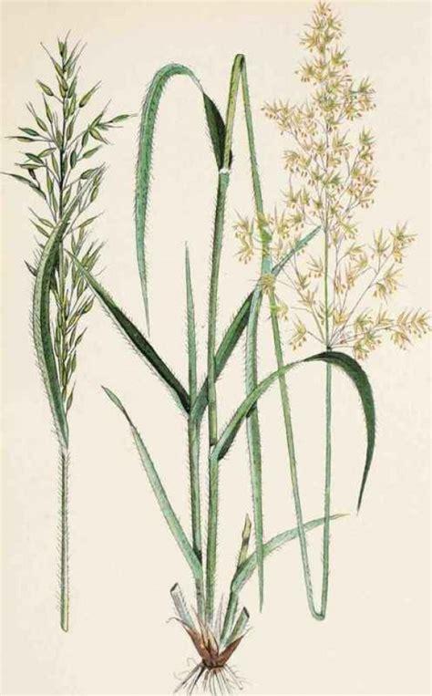 Home Decor Blogs Vancouver Design Squish Blog Beautiful Weeds Botanic Illustration