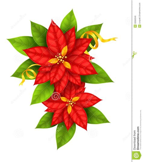 christmas star flowers poinsettia with gold ribbon stock