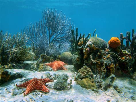 imagenes de la vida marina 191 sabes de qu 233 manera impacta tu basura a las especies