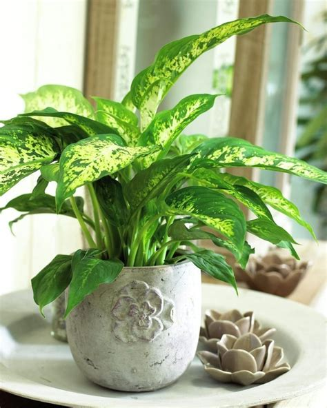 grow ls for indoor plants 15 best images about house plants on lifestyle