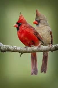 1200x1800px 614111 cardinal bird 1606 33 kb 16 02