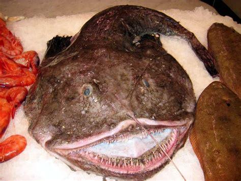 cucinare la rana pescatrice al forno katrinshine rana pescatrice al forno monkfish in the oven