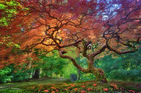 arterial spray portland japanese garden
