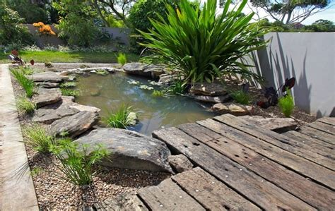 frog pond backyard frog pond yard treats and designs pinterest