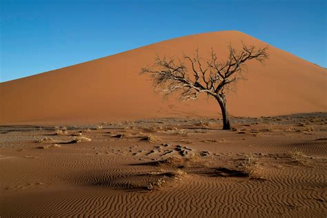 7 days 1 500 miles in namibia the new york times