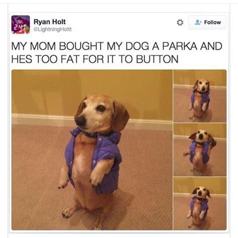 fat dog in a little coat dogs pinterest fat dogs