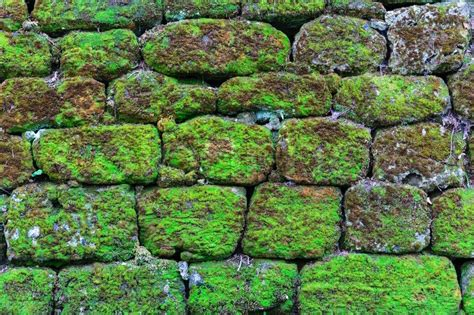 New Home Construction Plans by Old Stone Wall Overgrown With Moss Stock Photo Colourbox