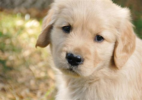 puppy slideshow puppy wallpapers slideshow