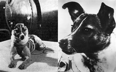 laika  dog  sacrifice  science     mission  space howl   dog animal