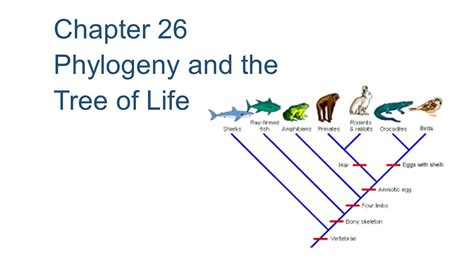 what do trees represent chapter 26 phylogeny and the tree of life ppt video chapter 26 phylogeny and the tree of life ppt download
