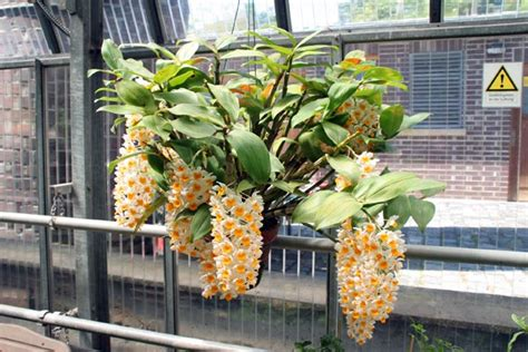 garten jena der botanische garten in jena