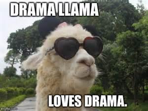 Funny Llama Memes - drama llama meme memes