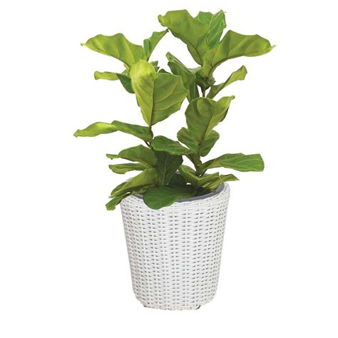 Plastic Strawberry Planter by Plastic Strawberry Planter In Stock Now Greenfingers