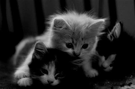 imagenes con movimiento en tumblr meow gatitos 3 megapost taringa