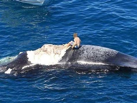 boat crash shark man regrets jumping onto whale being eaten by sharks