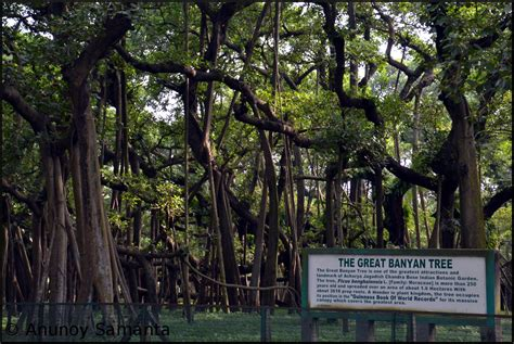 botanical garden shibpur botanical garden shibpur panoramio photo of botanical