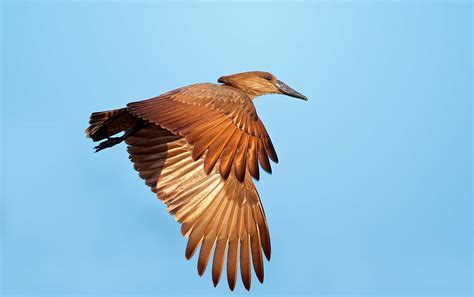 bocca di gabbia il volo degli uccelli