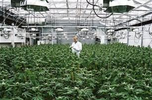 Light Deprivation Us Co Aspen Cannabis Greenhouse Near Basalt Wins County