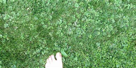 Unkraut Im Rasen Bestimmen 3413 by Unkraut Im Rasen Bestimmen Was Ist Das Hausgarten Net