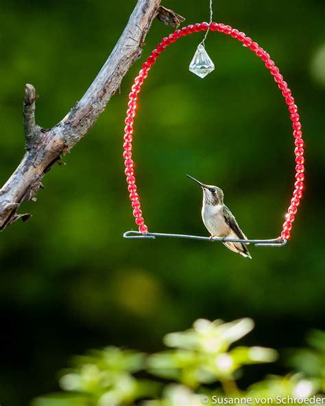 bird swing kids wall art hummingbird on swing fine art print bird