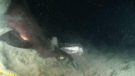 Sleeper Sharks by Sharks Dogfish And Sleeper Shark Aol News