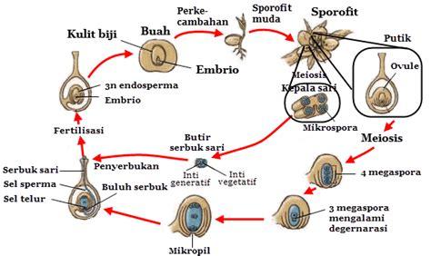 reproduksi tumbuhan angiospermae mikirbae
