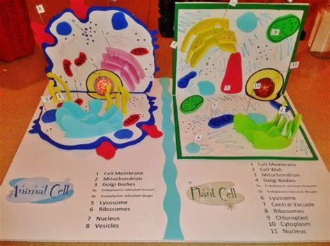 Animal And Plant Cell Project Idea Foam Is Awesome To