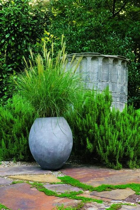 254 best ornamental grasses for sun and shade images on pinterest ornamental grasses