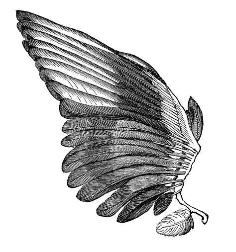 wings clip vintage clip image feather wings for the