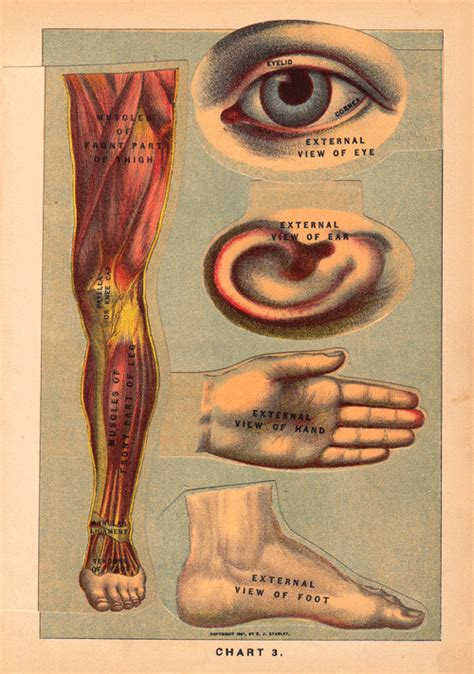 anatomy book with cadaver pictures anatomical illustrations from 1901 robotspacebrain