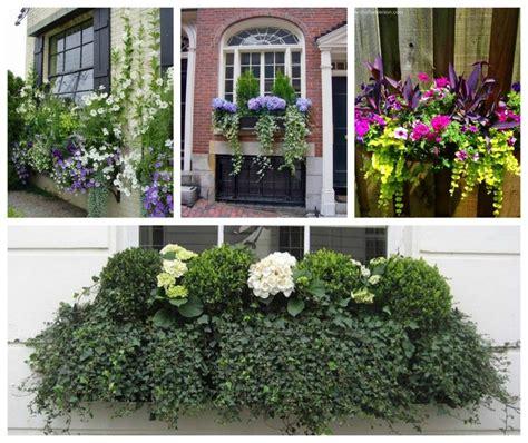 fioriere da davanzale composizioni fioriere da esterno js04 pineglen