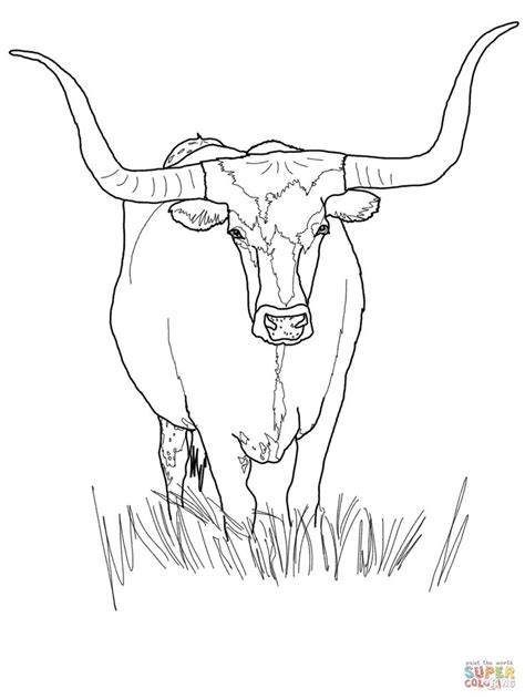 texas longhorn cattle coloring pagejpg  coloring