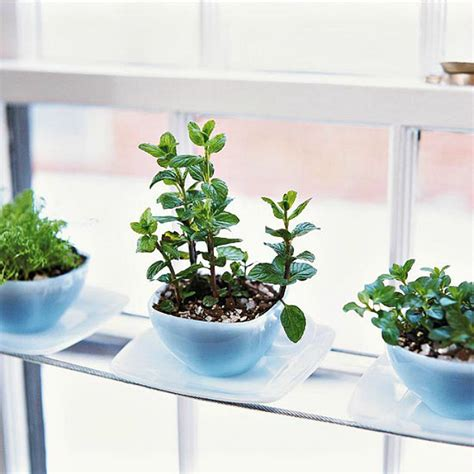 kitchen window herb garden 15 phenomenal indoor herb gardens