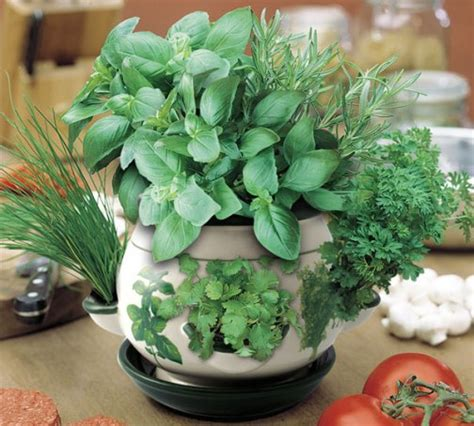 how to grow a herb garden in pots improvised pots for your indoor herb garden gardening