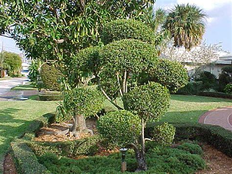 Common Backyard Mushrooms Topiary Study Iii Elpasonovicegardener