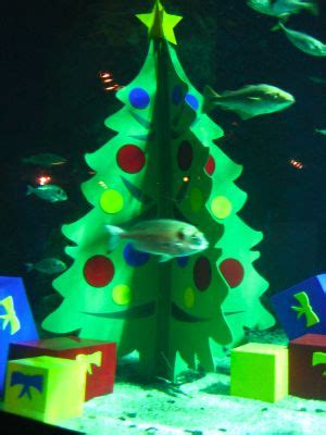 underwater christmas at the aquarium 15 december 2005