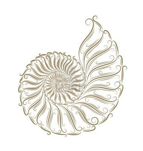 nautilus shell tattoo best 25 nautilus ideas on geometric
