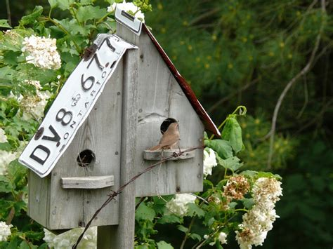 How To Build Birdhouses And Feeders you ve never seen bird feeders like jean s cynthia reyes