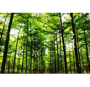 大寮萬大橋旁 私密景點 森林農場 Forest Farm Daliaos