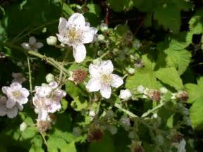 white flowers bush by ruukuxp on deviantart