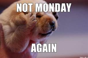 Monday Meme Images - monday dog meme memes