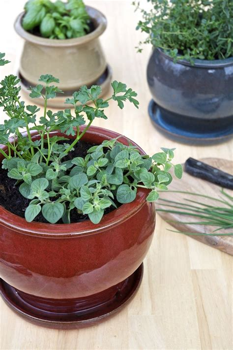 Small Herb Planters by Best 25 Small Herb Gardens Ideas On Kitchen
