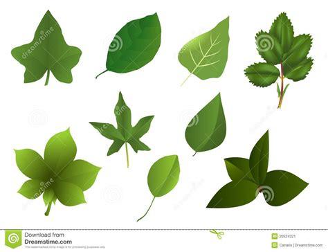 imagenes en varias hojas conjunto de varias hojas vector de los cdr imagen de
