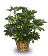 guide to common house plants identifying house plants www pixshark images