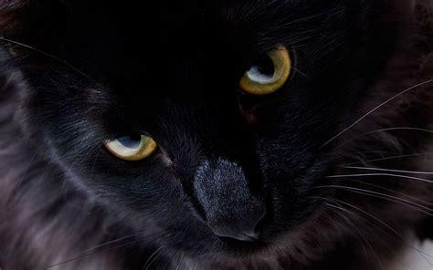 wallpaper dark cat dark gaze wallpaper and background 1440x900 id 108972