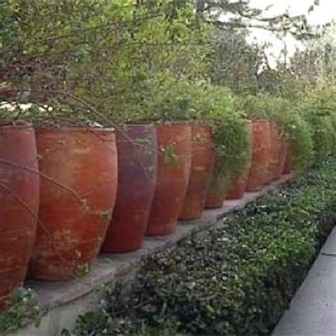 how to create privacy in your backyard amazing ways to create privacy in your yard diycraftsguru