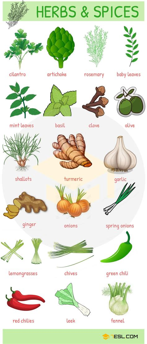 fruits and vegetables vocabulary in