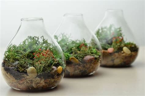 fiori in bottiglia piante in bottiglia piante appartamento coltivare
