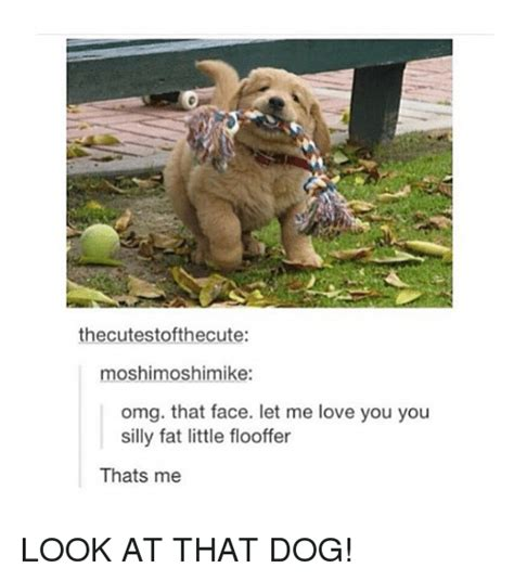 Let Me Love You Meme - 25 best memes about look at that dog look at that dog memes