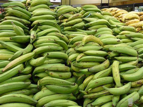 imagenes platanos verdes platano un viaje gastron 243 mico por am 233 rica latina a